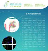 循环肿瘤细胞(CTC)检测